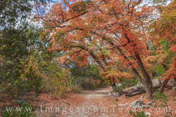 lost maples, hiking, bigtooth maple, red, orange, november, fall, autumn, cool, state parks