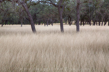 bandera county,november grasses,texas hill country