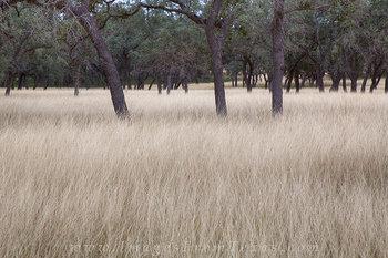 Bandera County - Grasses of Autumn