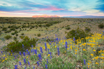 Big Bend Bluebonnets and Thunderstorms