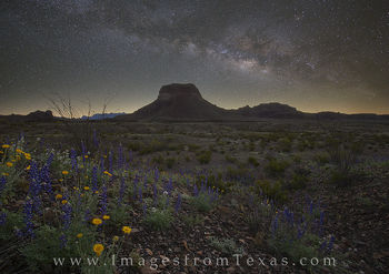 big bend national park, big bend, bluebonnets, blue bonnets, texas wildflowers, wildflowers, milky way, texas parks, texas night sky, texas landscapes, west texas, national park