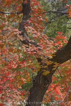 guadalupe mountains, mckittrick canyon, bigtooth maples, fall in texas, autumn colors, fall colors, west texas images, guadalupe mountains national park, texas national parks