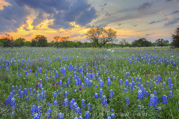 texas wildflowers,texas wildflower photos,bluebonnet photos,texas hill country,texas landscapes