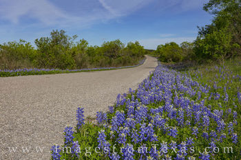 bluebonnets, hill country, drives, county roads, rural roads, farm roads, afternoon