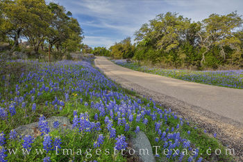 Bluebonnet Drive in the Texas Hill Country 328-1