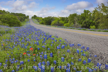 bluebonnets, county roads, ranch roads, wildflowers, paintbrush, hill country drives, afternoons, texas hill country