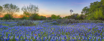 bluebonnets, best bluebonnet drives, bluebonnet roads, texas hill country, bluebonnet roads, backroads, exploring, green, escape, panorama