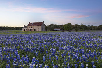 bluebonnet photos, texas wildflower images, texas wildflowers, bluebonnet prints, marble falls, bluebonnet house, texas hill country, texas sunset