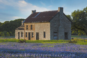 bluebonnet photos, texas wildflower photos, texas bluebonnets, bluebonnet house, marble falls, texas hill country, texas hill country prints