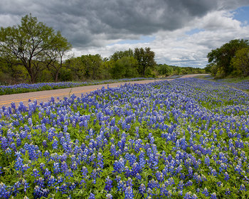 The Hill Country Road Less Traveled
