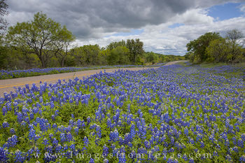 bluebonnet photos, bluebonnet prints, texas roads, texas hill country, mason texas, texas wildflowers, texas wildflower images