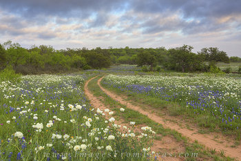 texas wildflowers,wildflower photos,texas landscapes,bluebonnets,texas hill country