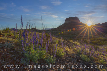 bluebonnets, big bend, big bend bluebonnets, sunrise, big bend national park, landscapes, texas landscapes, texas sunrise, chisos, chisos mountains, desert, chihuahuan desert, remote