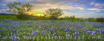 bluebonnets, wildflowers, sunset, hill country, dirt road, panorama, sunburst, spring, april, texas wildflowers, blooms, blue, orange, hills