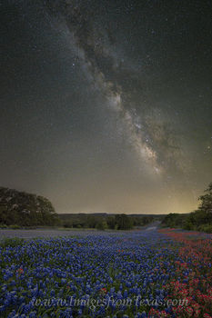 Bluebonnets and Paintbrush under the Milky Way