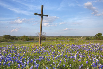 Bluebonnets and a Cross 1