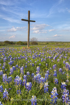 Bluebonnets and a Cross 2