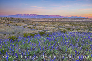 Sierra del Carmen, bluebonnets, big bend national park, spring, february, east river road, sunset, wildflowers, texas bluebonnets, dirt road, spring