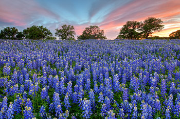 texas wildflower photos,bluebonnet images,texas hill country,bluebonnets,texas landscapes