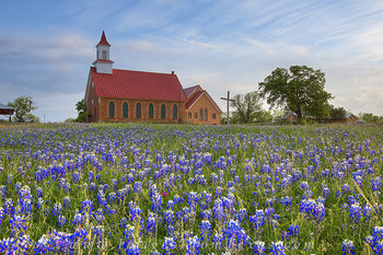 Late Afternoon Bluebonnets, Art, Texas 1