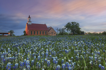 Bluebonnets in the Evening - Art, Texas