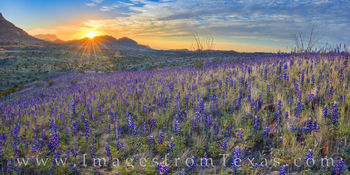 bluebonnets, big bend, chisos mountains, river road west, panorama, national park, desert bloom, wildflowers, west texas, sunrise, beauty, sunburst