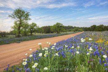 Bluebonnets on a Dirt Road 1