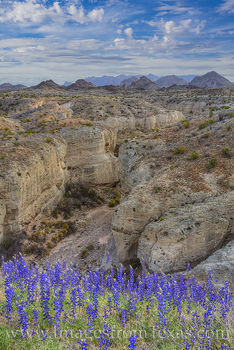 bluebonnets, tuff canyon, wildflowers, big bend national park, chihuahuan desert, texas parks, national parks, ross maxwell, canyon, western slope