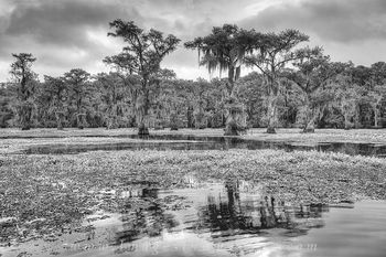 texas landscapes, black and white, texas black and white, black and white prints, texas images, caddo lake images, caddo lake prints, texas prints
