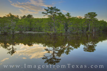 Caddo Lake Evening 7