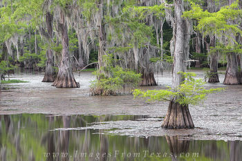 Caddo Lake State Park 4