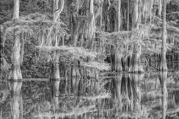 Caddo Lake State Park Black and Whtie 1