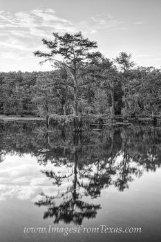 Caddo Lake State Park Black and White 1