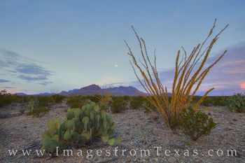 Chisos mountains, big bend national park, ocotillo, moonset, sunrise, chihuahuan desert, texas landscapes, texas hikes, chisos images, big bend images, texas national parks