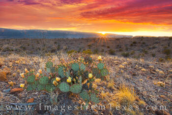 big bend national park,big bend images,chisos mountains,texas wildlflowers,prickly pear,texas landscape images,texas landscape prints,big bend prints