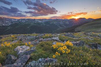 Colorado wildflowers, Rocky Mountain National Park, sunflowers, colorado sunflowers, colorado landscapes, rocky mountains, old man of the mountain