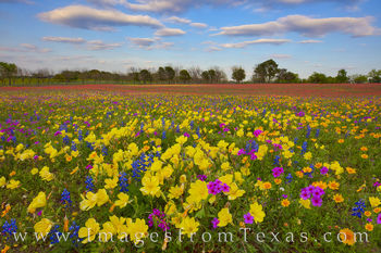 Colorful Wildflowers in the Late Afternoon 327-1