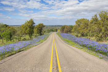 Country Roads and Texas Bluebonnets 1