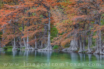 Cypress along the Frio River in Fall 111-1