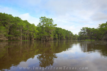 Cypress of Caddo Lake 6