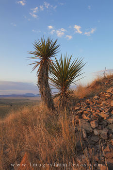 davis mountains images, fort davis, davis mountains state park, west texas, texas landscapes, yucca, morning, sunrise