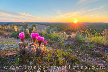 enchanted rock, sunset, purple candle, prickly pear, quinta mazatlan, cactus blooms, wildflowers, texas sunset, texas state parks