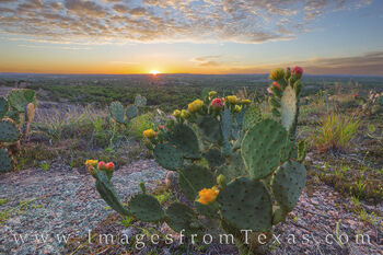Enchanted Rock Prickly Pear Evening 2