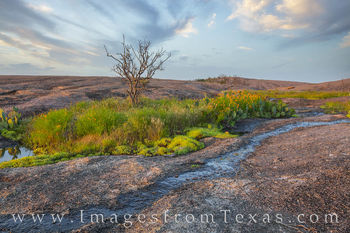 wildflowers, enchanted rock, hill country, state parks, spring, prints for sale, texas photos for sale