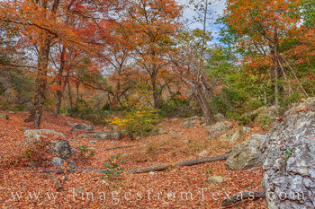 lost maples, fall color, autumn, fall prints, texas state parks, texas hill country, bigtooth maples