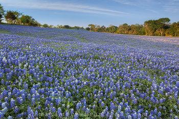 First Sunlight Brightens a Field of Blue