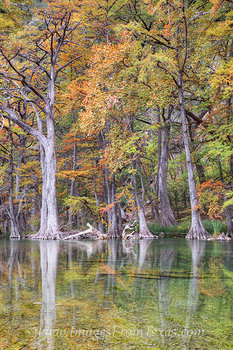 garner state park,cypress trees,texas hill country