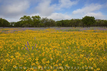 Gillispie County Spring Wildflowers 2