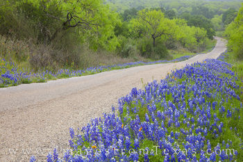 Hill Country Bluebonnet Drives 413-2