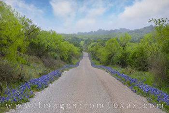 bluebonnets, hill country, county roads, 308, hills, morning, fog, wildflowers, best drives, backroads, spring, quiet